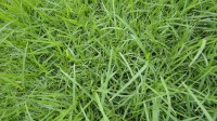5051003-green-grass-texture-pack-01_p010