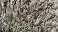 5051007-tree-bark-texture-01_p003
