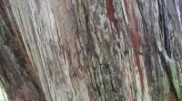 5051007-tree-bark-texture-01_p007