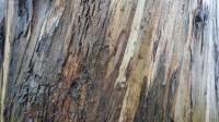 5051009-wet-tree-bark-texture-02_p012