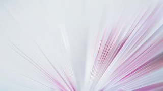Pink and White Radial Stripes Background Design