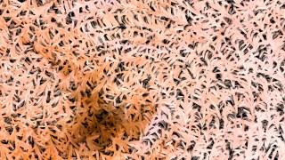 Light Orange Textured Background Image