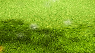 Abstract Lime Green Texture Background Vector Image