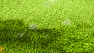 Lime Green Abstract Texture Background Vector Illustration
