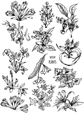 Sketchy Plants Vector and Photoshop Brush Pack-01