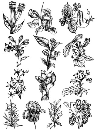 Sketchy Plants Vector and Photoshop Brush Pack-02