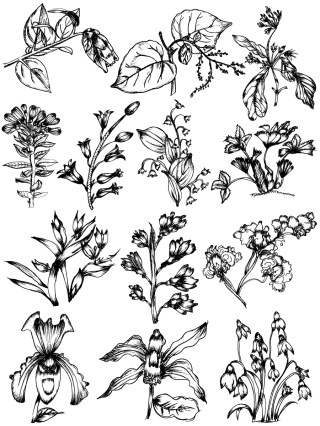 Sketchy Plants Vector and Photoshop Brush Pack-03