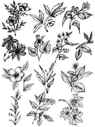 Sketchy Plants Vector and Photoshop Brush Pack-04