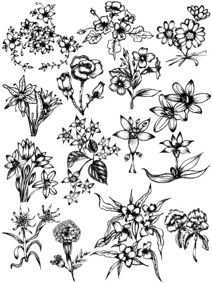 Hand Drawn Sketch Flowers Vector and Photoshop Brush Pack-01