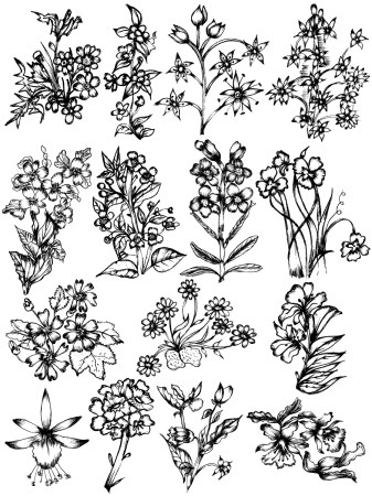 Hand Drawn Sketch Flowers Vector and Photoshop Brush Pack-03