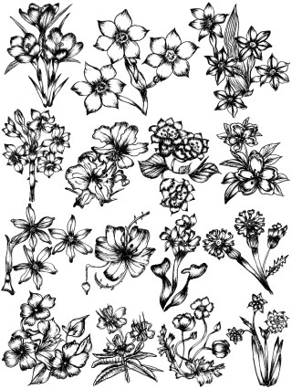 Hand Drawn Sketch Flowers Vector and Photoshop Brush Pack-06