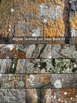 Algae Texture on Tree Bark 01