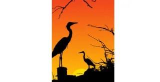 Heron Birds Silhouette
