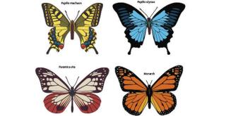 Colorful Butterflies Free Vector Images