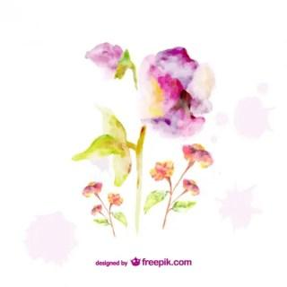 Beautiful Watercolor Flowers Graphics Free Vector