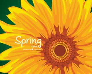 Sunflower Illustration Free Vector