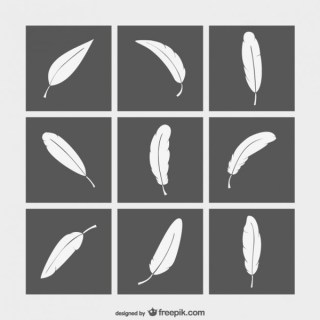 Black and White Feathers Collection Free Vectors