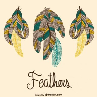 Colorful Feathers Vector Free Vectors