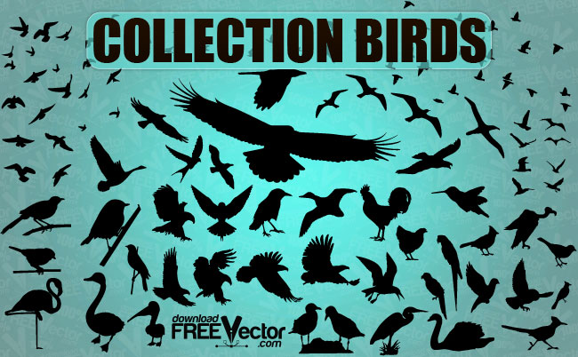 Collection Birds Free Vector
