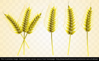 Ears Of Wheat Free Vector