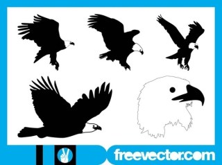 Bald Eagle Free Vector