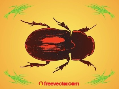 Beetle Free Vector