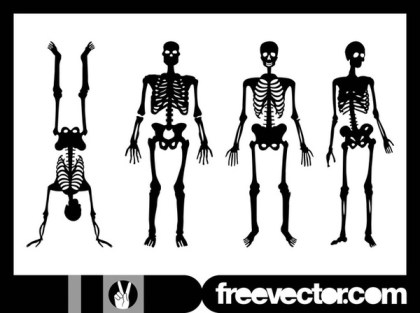 Human Skeletons Free Vector