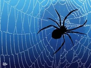 Spider Free Vector