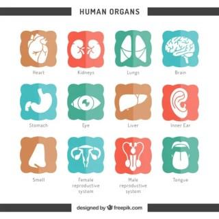 Icons of Human Organs Free Vector
