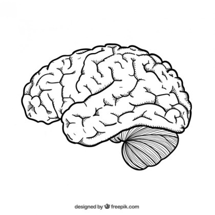 Hand Drawn Brain Free Vector