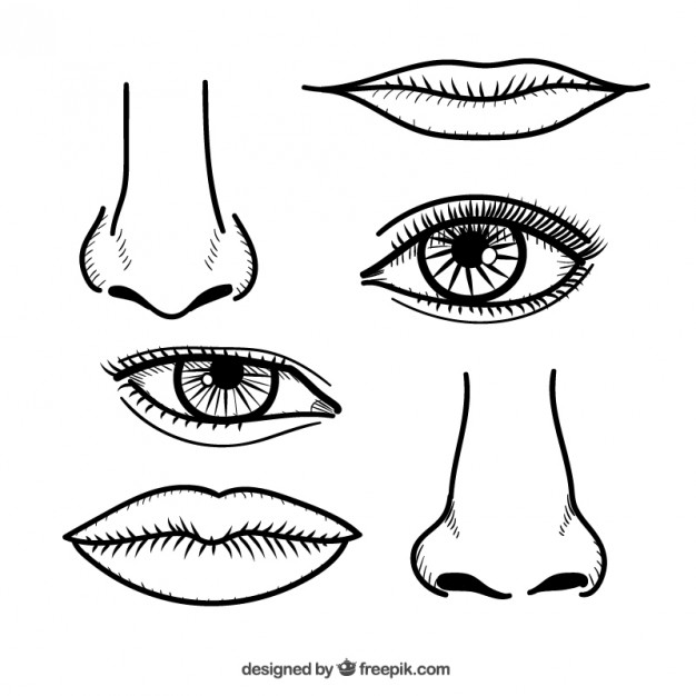 Noses and Lips in Hand Drawn Style Free Vector