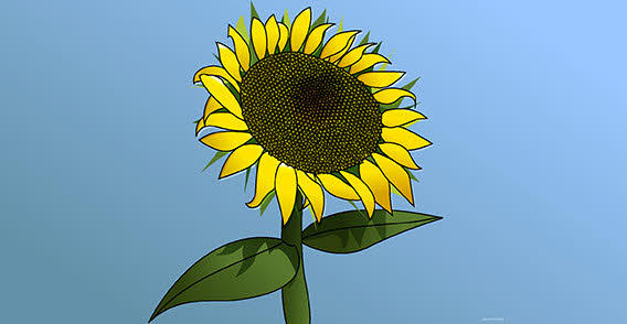Sunflower Girasol Vector
