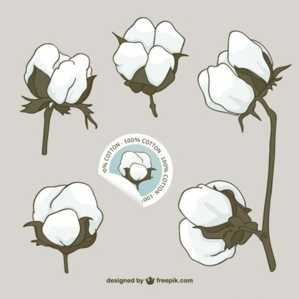 Cotton Flowers Free Vector