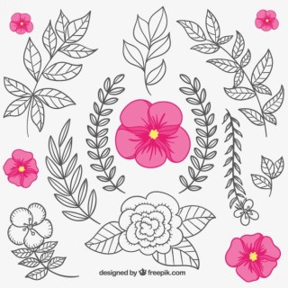 Floral Elements in Hand Drawn Style Free Vector