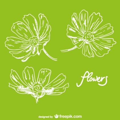 Flowers Hand Drawn Design Free Vector
