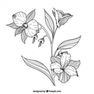 Hand Drawn Flowers Free Vector