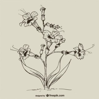 Hand Drawn Vintage Flowers Free Vector