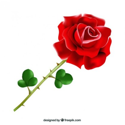 Realistic Red Rose Free Vector