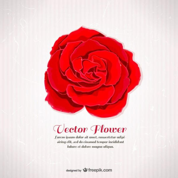 Template with Red Rose Free Vector