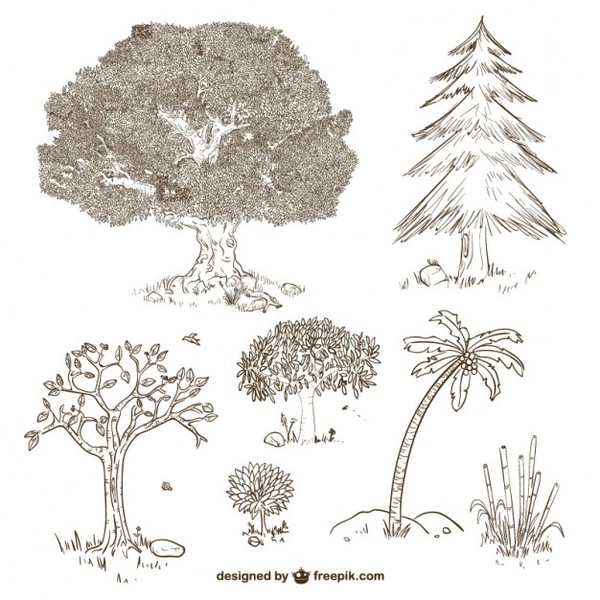 Trees and Plants Drawings Free Vector