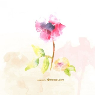 Watercolor Flowers Illustration Free Vector