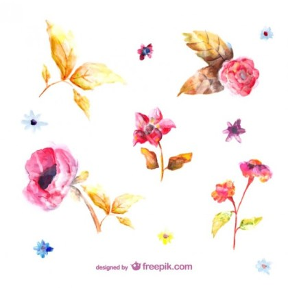 Watercolor Flowers Illustrations Free Vector