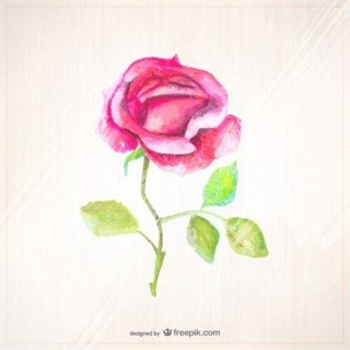 Watercolor Style Rose Free Vector