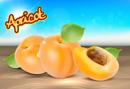 Realistic Apricot Vector Illustration