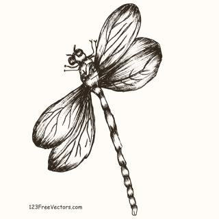 Hand Drawn Dragonfly