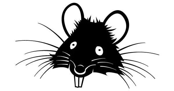 Rat with Big Teeth Image