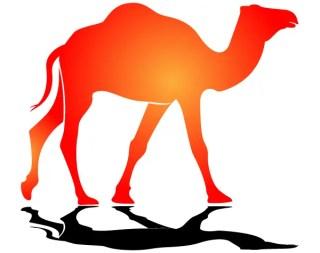 Camel in the Sun Vector