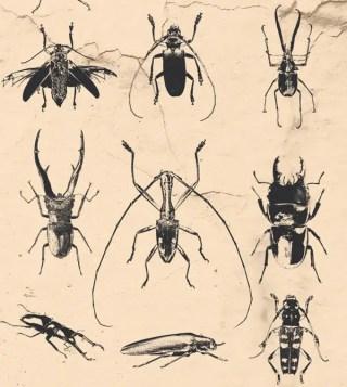 Beetle Free Vector Pack