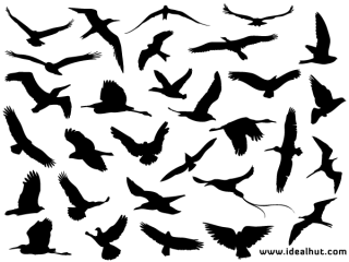 Free Flying Bird Silhouettes Vector