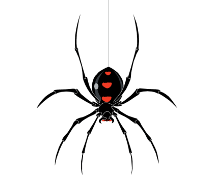 Free Spider Vector Image